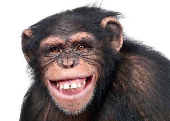 Do you work for a monkey tree organisation chris skinners blog smiling monkey voltagebd Choice Image